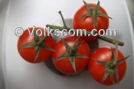 tomate ausgeizen tomatenausgeizen. Black Bedroom Furniture Sets. Home Design Ideas